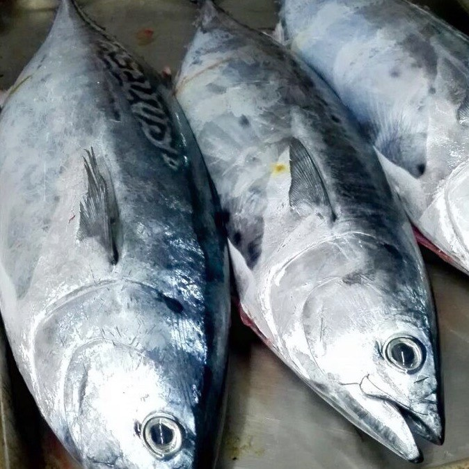 Elenco Pesce Azzurro Ecco Quali Sono I Pesci Azzurri Ristorante Grano